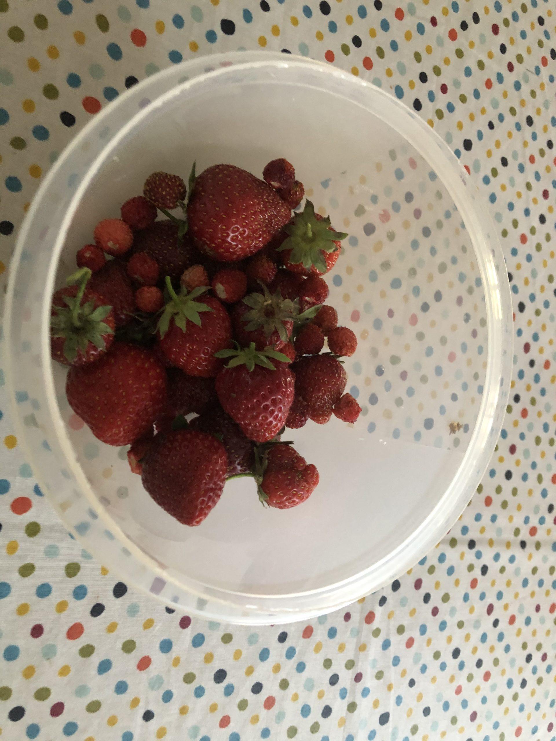 Alle Erdbeeren