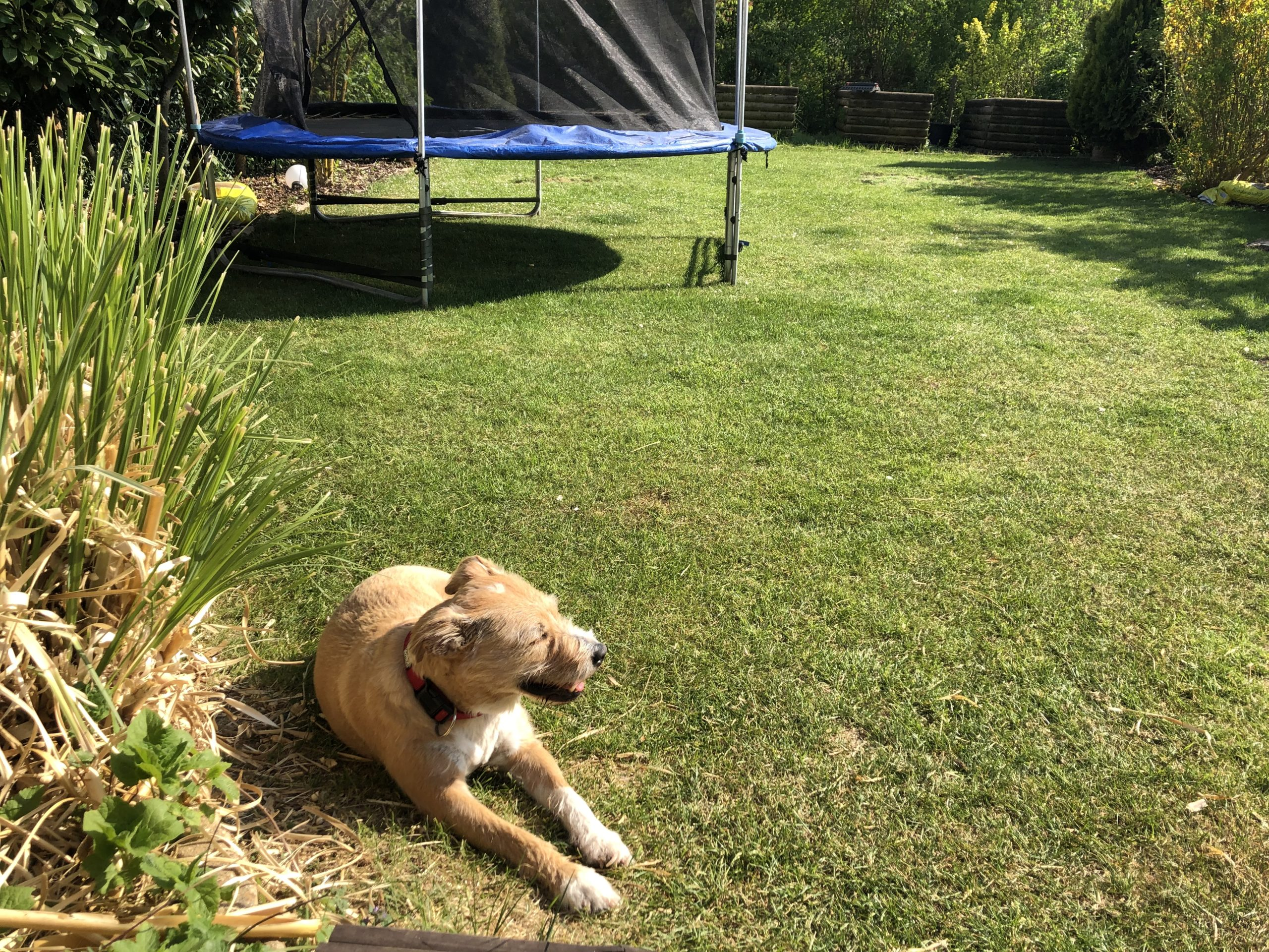 Hund Ella